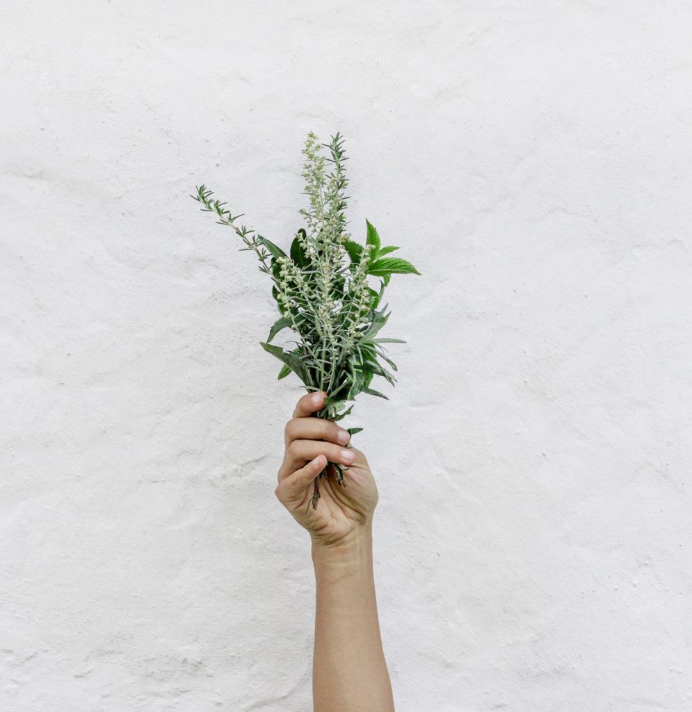mano con ramillete verde